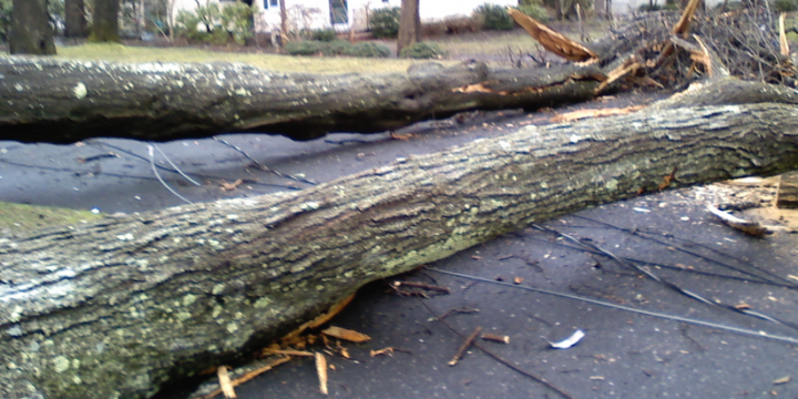 Structural Damage by Fallen Tree After a Storm