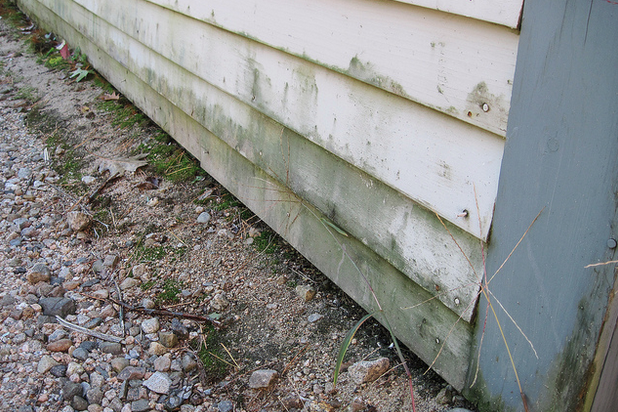 mold on home's siding